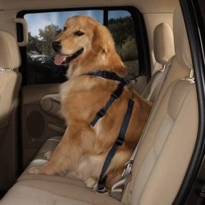 car-accidents, dog-safety, whiplash-injury, traffic-accidents, FLORIDA-DRIVING-SAFETY