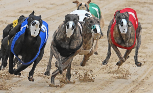 GREYHOUND-RACING,DOGS,FLORIDA-GREYHOUND-ASSOCIATION,PALM-BEACH-KENNEL-CLUB,ANIMAL-RIGHTS-ACTIVIST,DOG-RACES