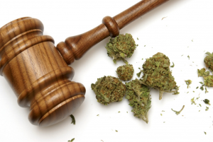 MEDICAL-MARIJUANA,FLORIDA-SUPREME-COURT,FLORIDA-DEPARTMENT-OF-HEALTH,MARIJUANA-BUSINESS